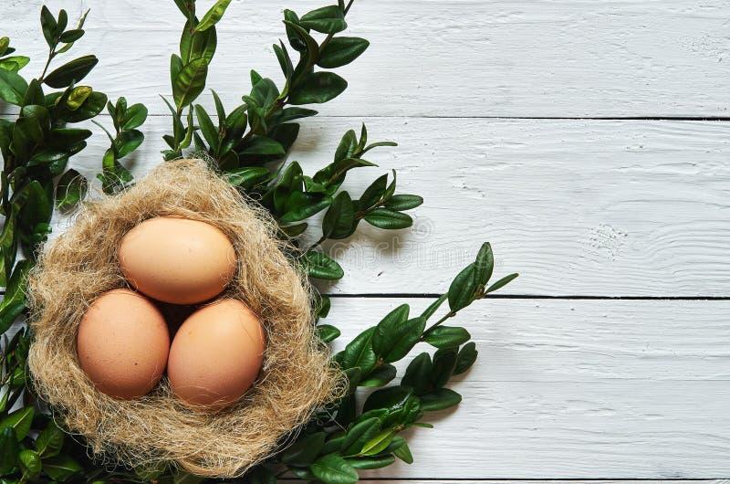 Aninhe com os ovos no fundo de madeira branco das pranchas foto de stock royalty free