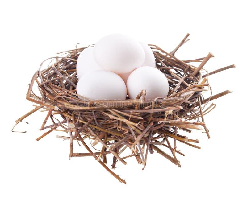 Aninhe com ovos imagem de stock