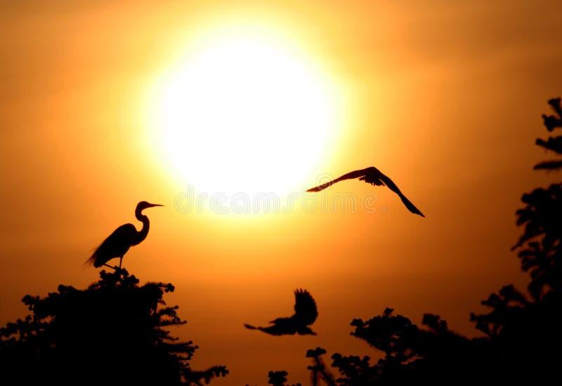 anioł egret fotografia stock