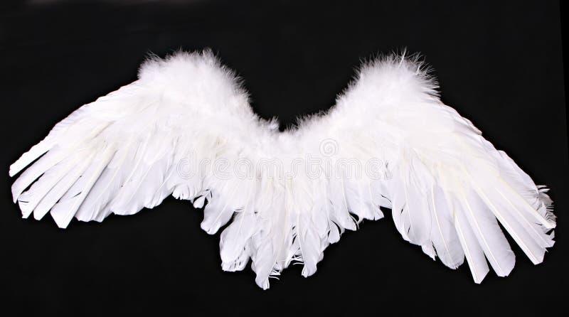 anioła amorka fotografii wsparcia skrzydła fotografia royalty free