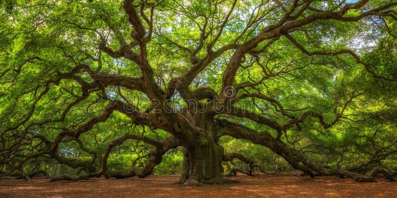 Anioła Dębowego drzewa panorama fotografia stock
