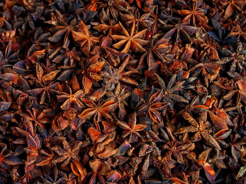 Anis αστεριών στοκ εικόνες
