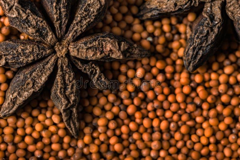 Anis d'étoile et graines de moutarde image stock