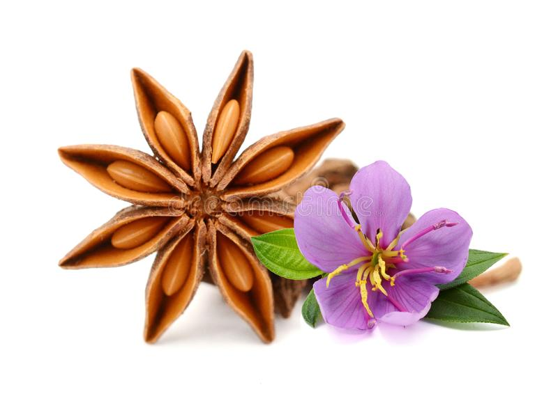 Anise star with clove. royalty free stock photos