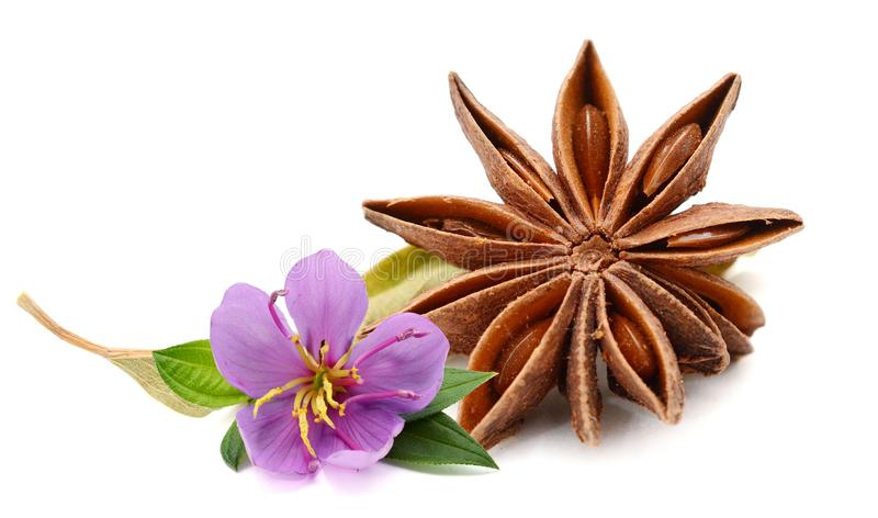 Anise star with clove. stock photography