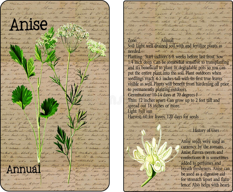 Anise Vintage Seed Packet imagens de stock royalty free