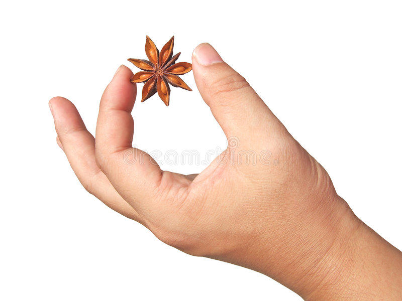 Aniseed in hand. With white background stock photo
