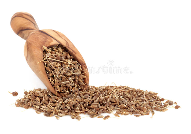 Aniseed Spice. In an olive wood scoop over white background stock photos