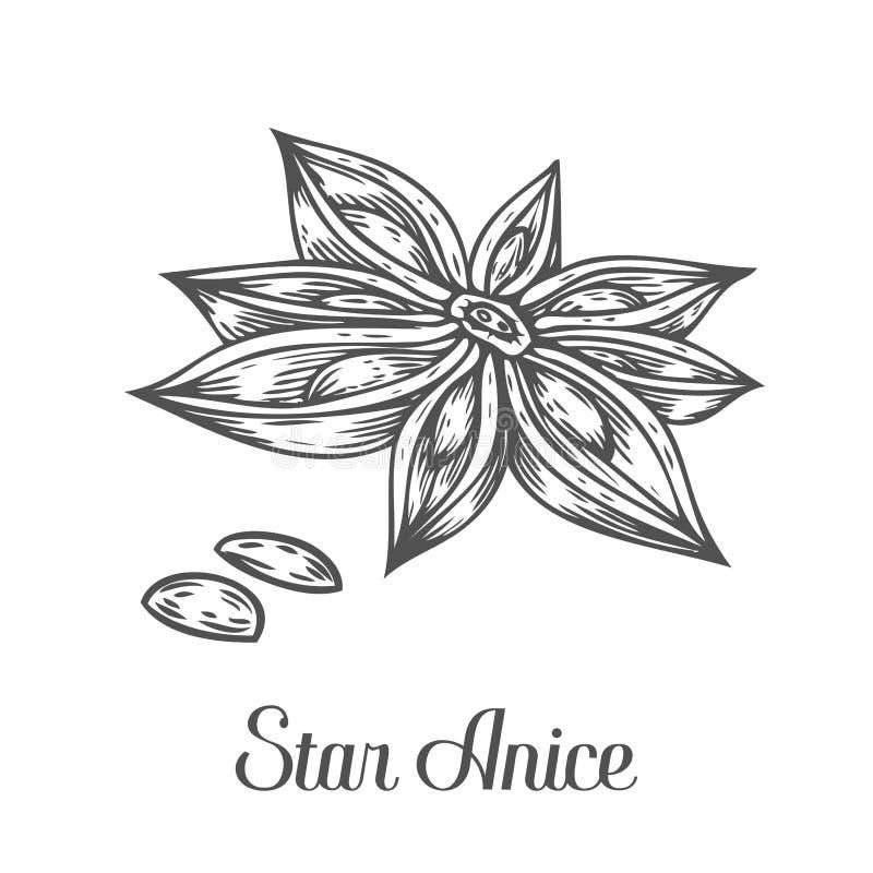 Anisstjärnablomman kärnar ur växten Den drog handen skissar vektorillustrationen på vit Kryddiga örtar Kock för design för klotte royaltyfri illustrationer