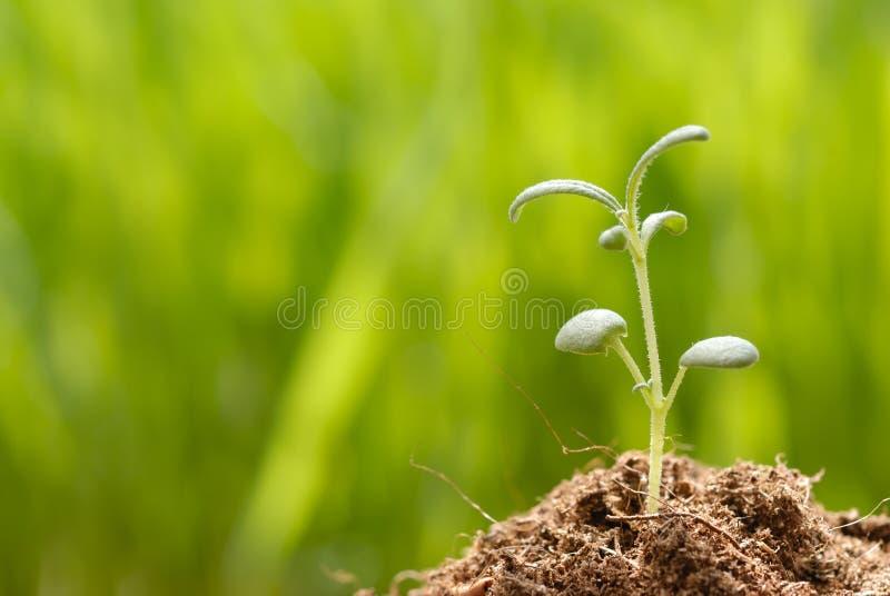 Aniversário de uma planta pequena imagens de stock