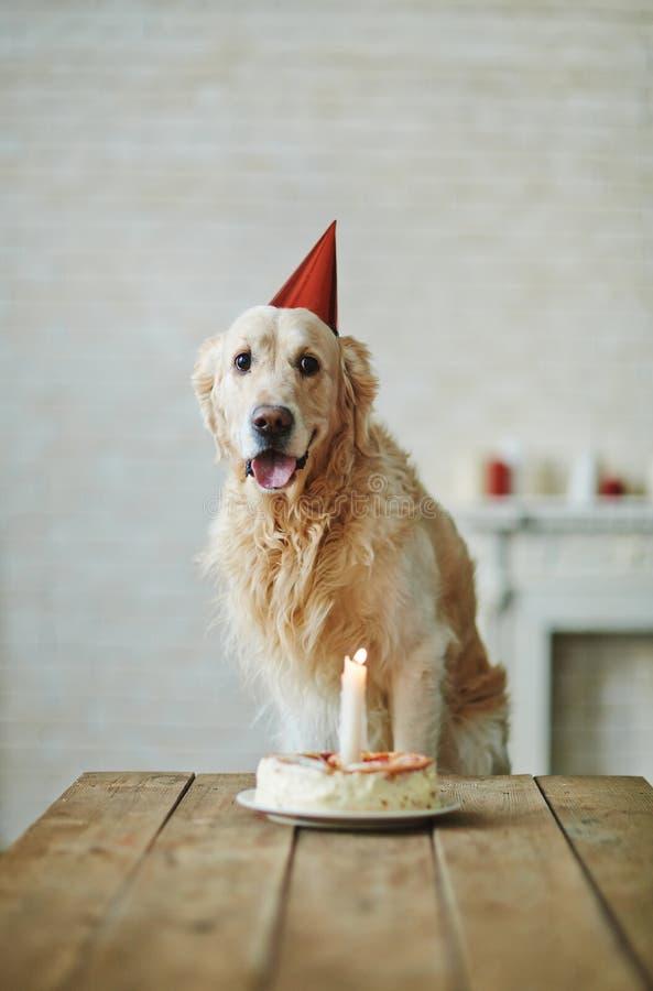 Aniversário do animal de estimação imagem de stock