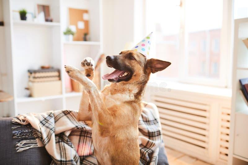 Aniversário do cachorrinho fotos de stock royalty free