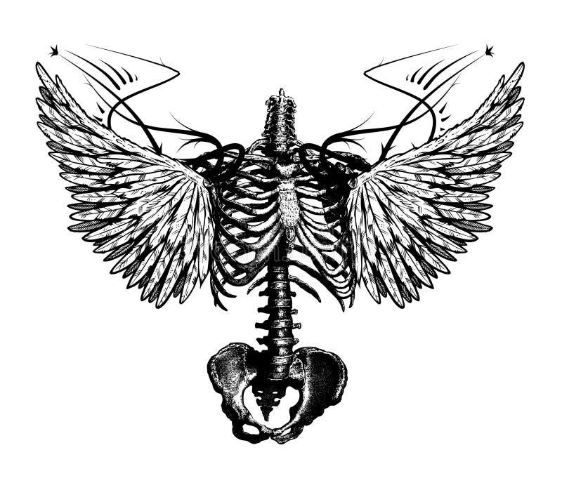 Anjo de esqueleto ilustração royalty free