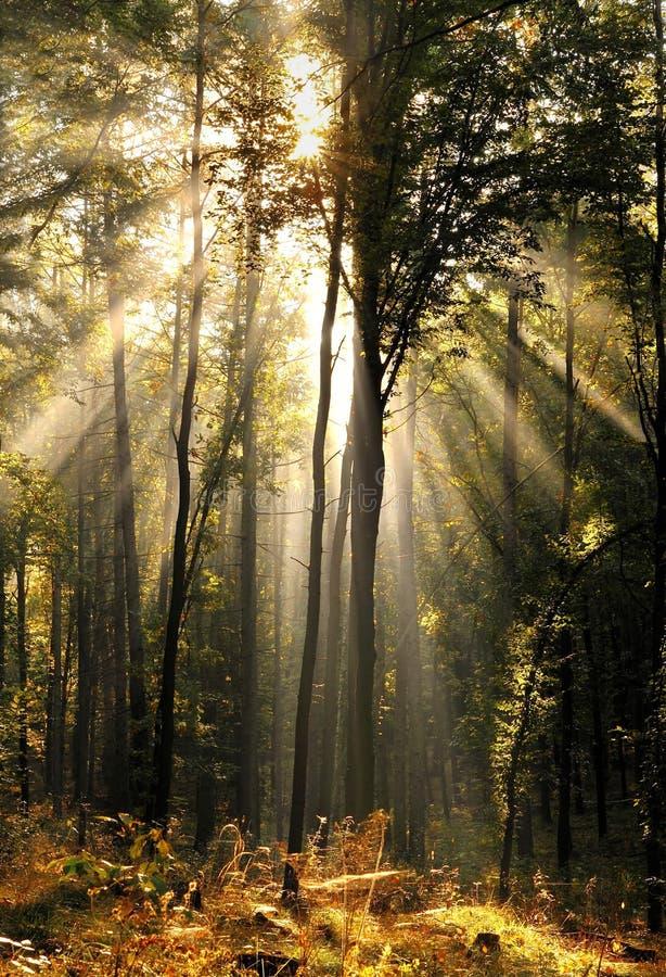 Anjo na floresta fotos de stock royalty free