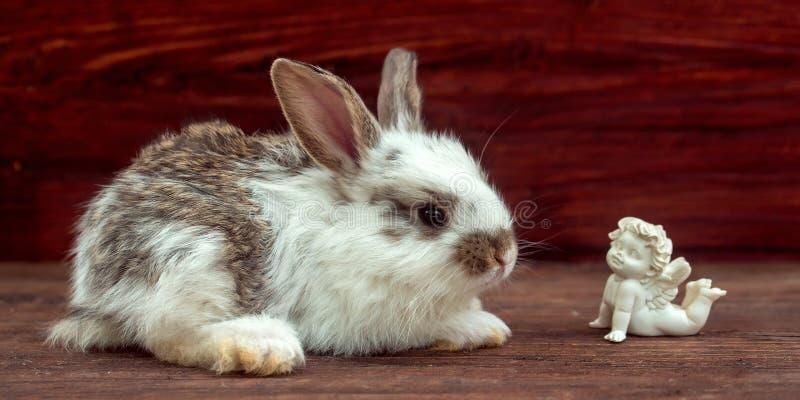 Anjo pequeno do coelho e do sonho imagem de stock