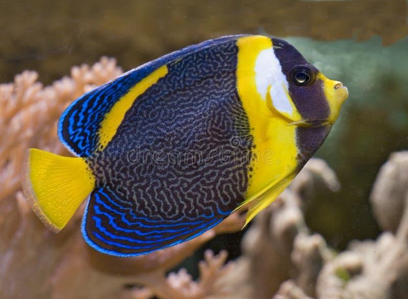 Download Anjo Scribbled imagem de stock. Imagem de aquário, vida - 536445