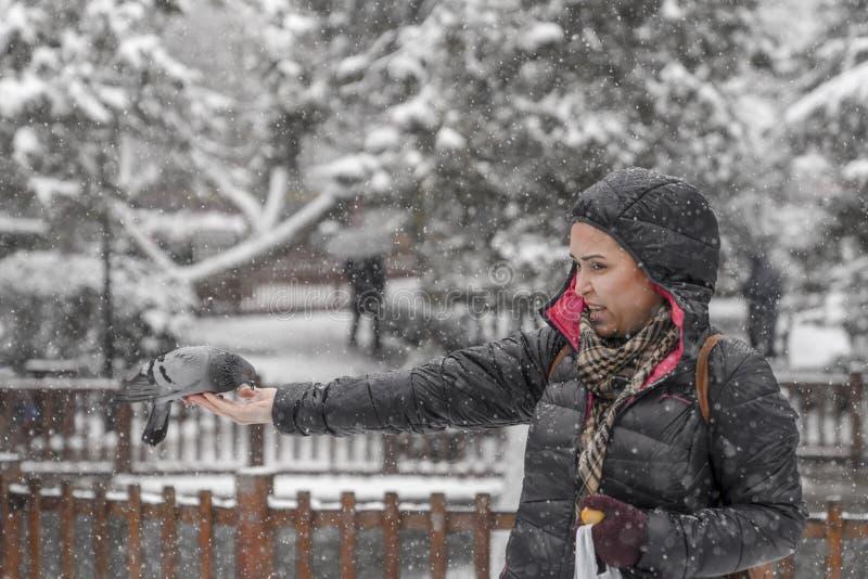 Ankara/Turkije-December 06 2018: Vrouwen voedende duif op zijn hand met simit die Turks ongezuurd broodje is royalty-vrije stock afbeeldingen
