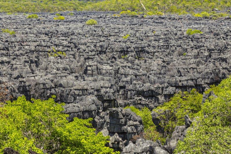 Ankarana Tsingy石头,北马达加斯加地标 免版税库存照片