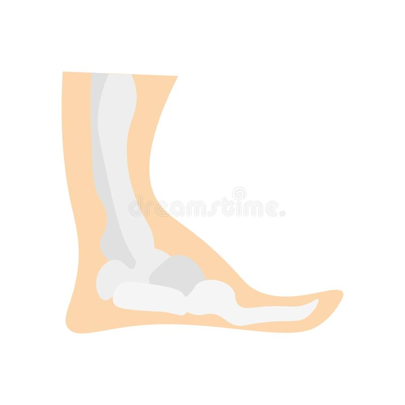 Ankle icon vector sign and symbol isolated on white background royalty free illustration