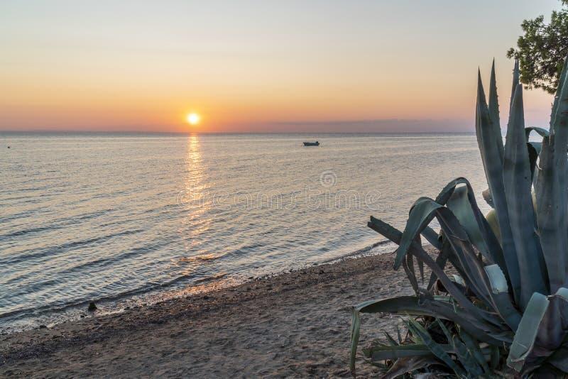 Anläggningen Aloe vera under en solnedgång på havet royaltyfri bild