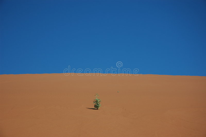 Anlage auf Sanddüne stockbild