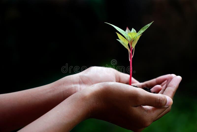 Anlage in den H?nden, menschliche H?nde, die Jungpflanze halten lizenzfreie stockfotos