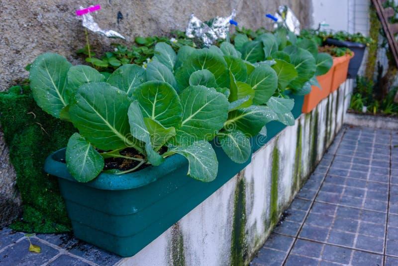 Anlage des Kohls und der Blätter in den Vasen eines städtischen Gartens stockbild