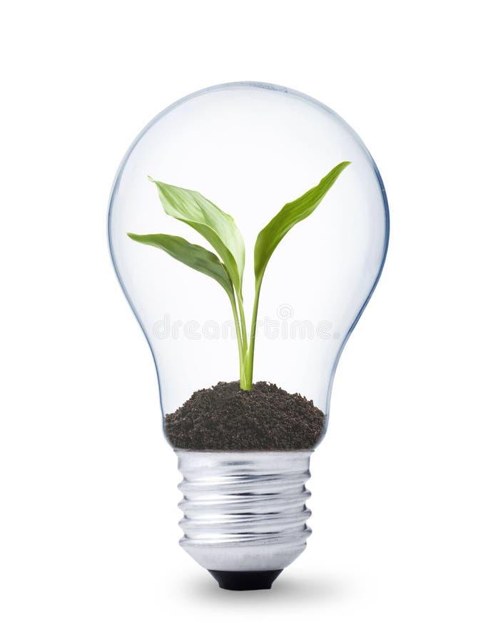 Anlage, die innerhalb einer Glühlampe wächst stockfoto