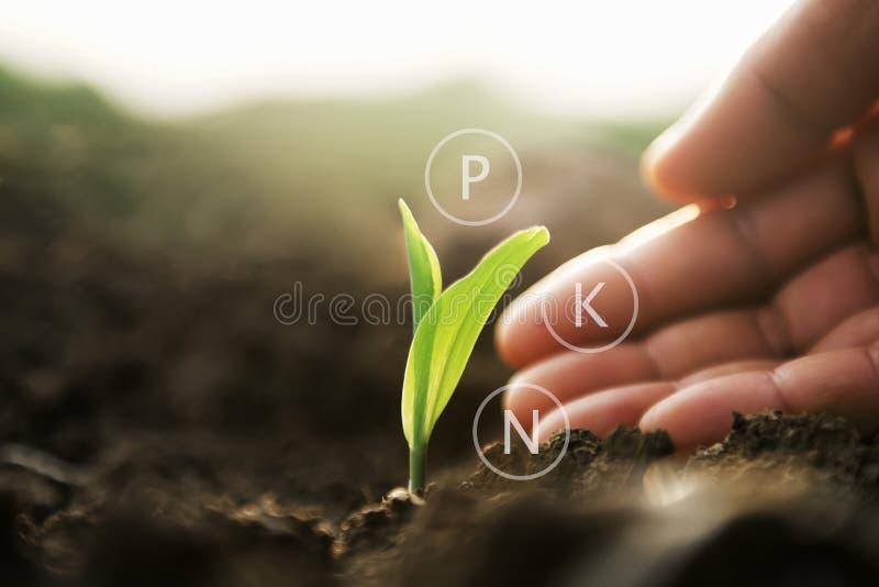 Anlage, die mit der Hand und digitaler Mineralikone wächst Landwirtschaft comcept stockfoto