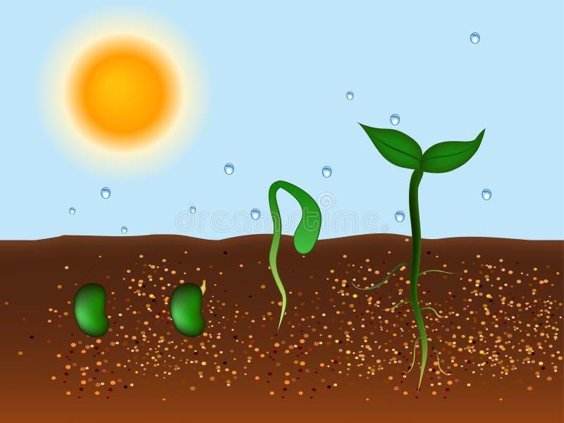 Anlage, die vom Boden wächst stock abbildung