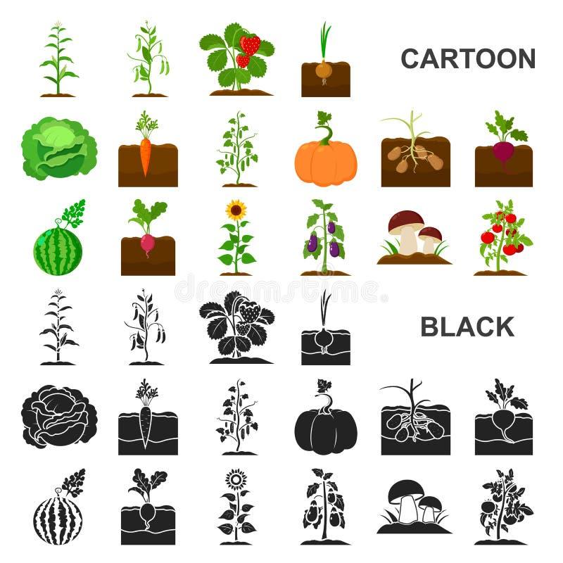Anlage, Gemüsekarikaturikonen in der Satzsammlung für Design Garten und Ernte vector Netzillustration des Symbols auf Lager vektor abbildung