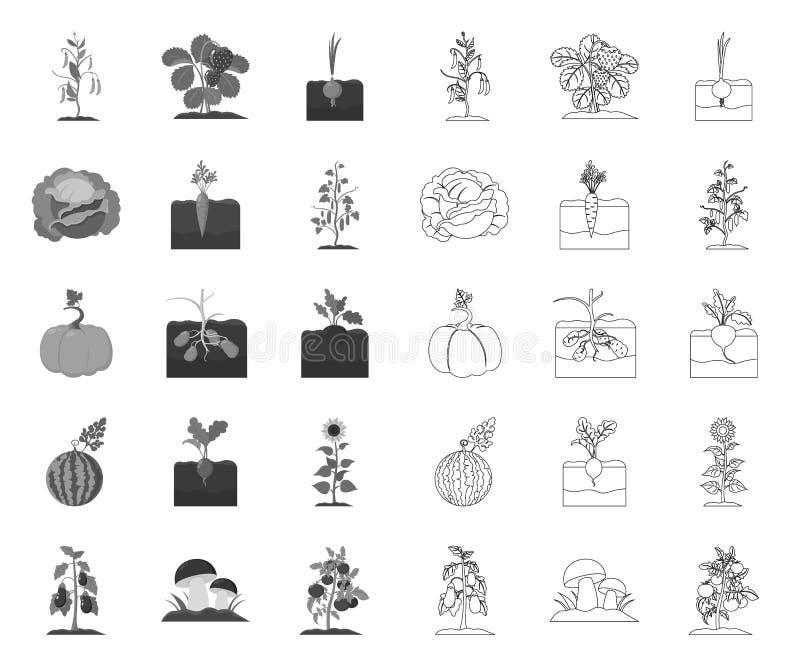 Anlage, Gemüsemono, Entwurfsikonen in gesetzter Sammlung für Entwurf r stock abbildung