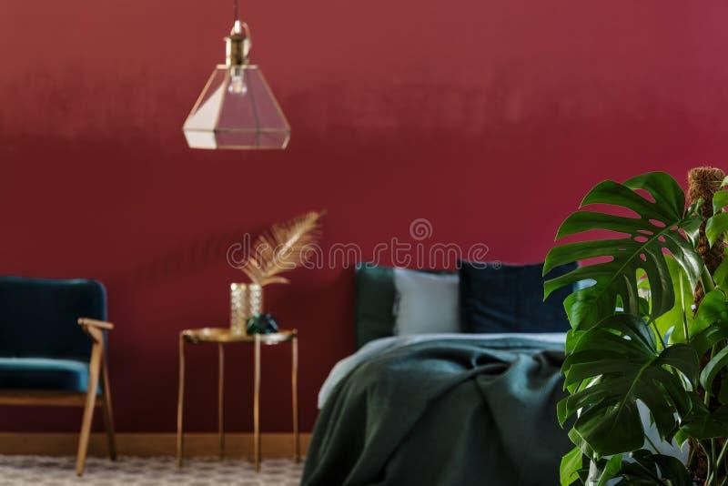 Anlage Monstera Deliciosa im Schlafzimmer lizenzfreie stockfotos