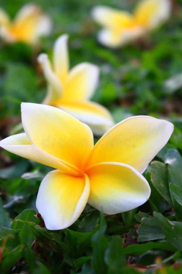 Anlage und Blume lizenzfreie stockfotos