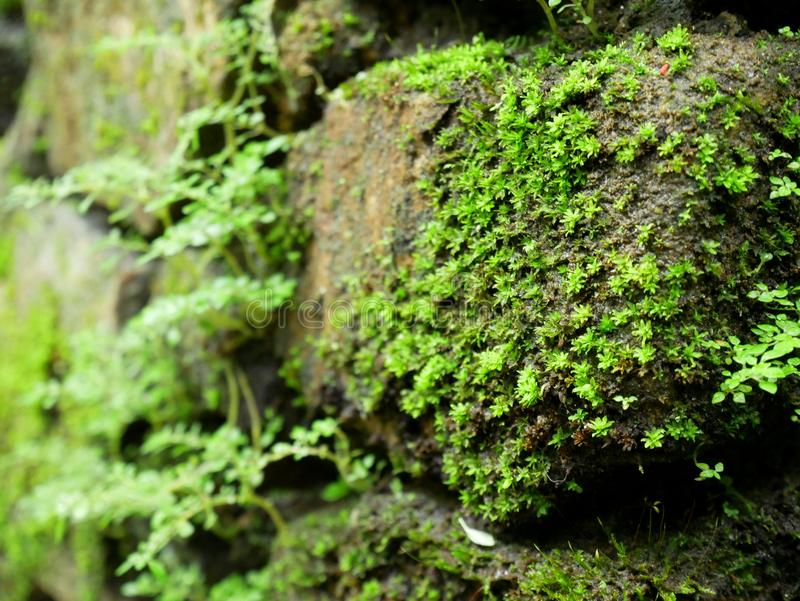 Anlage wachsen auf Stein lizenzfreie stockbilder