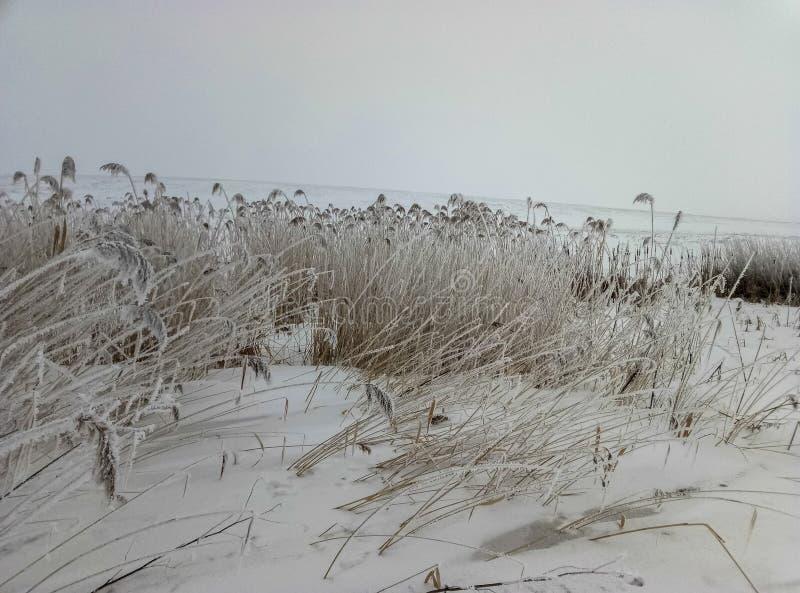 Anlagen auf dem Gebiet umfassten durch Frost die Besonderen der Jahreszeit lizenzfreie stockfotografie