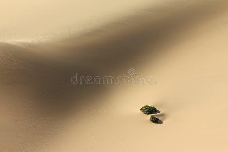 Anlagen in der Sanddünewüste Herausforderung zu überleben stockfotos