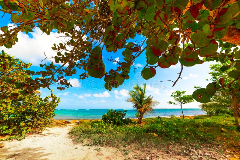 Anlagen durch das Meer Le Moule in Guadeloupe stockfoto