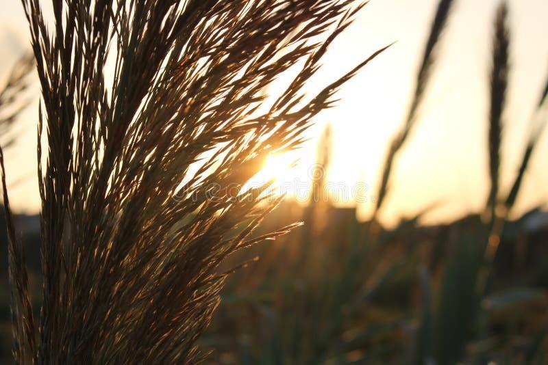 Anlagen und Sonnenuntergang stockfotos
