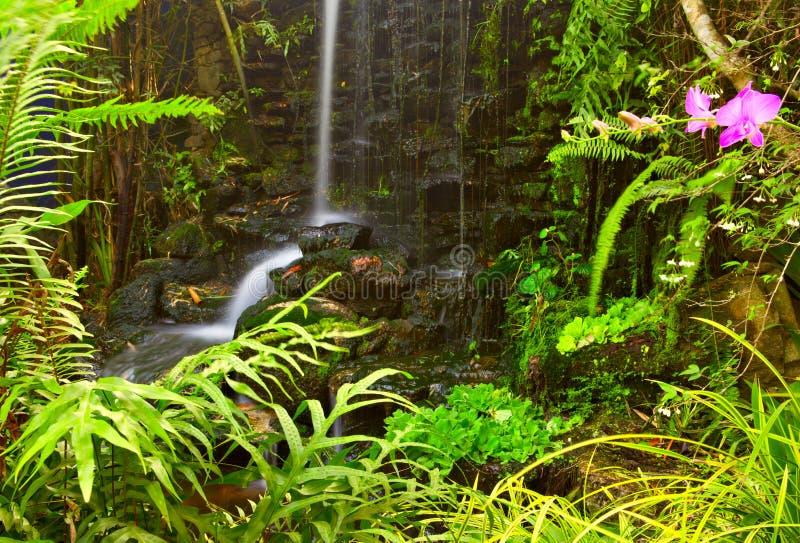 Anlagen und Wasserfall stockfotos
