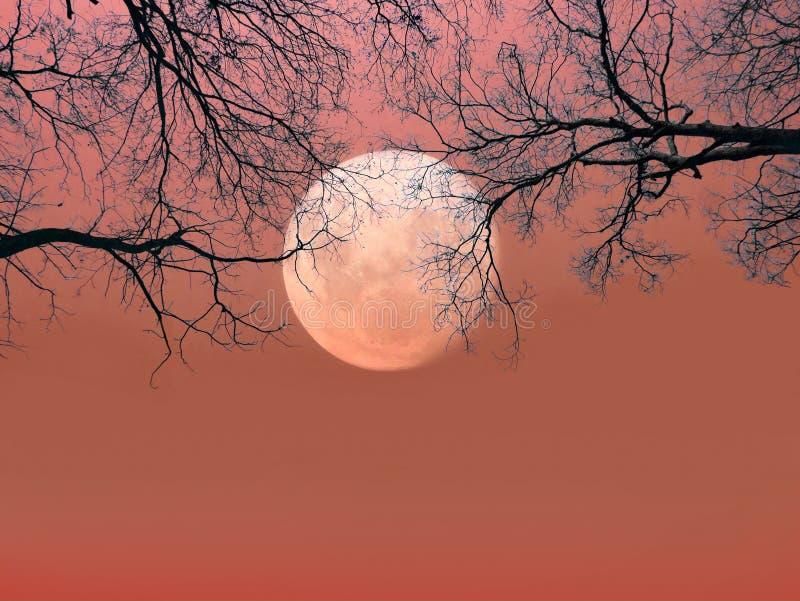 anmärkningar för bakgrundsslagträhalloween månsken Spöklik skog med döda träd för kontur royaltyfri foto