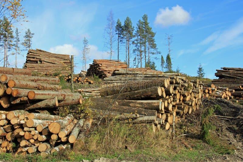 Anmeldender Herbst-Wald stockfoto