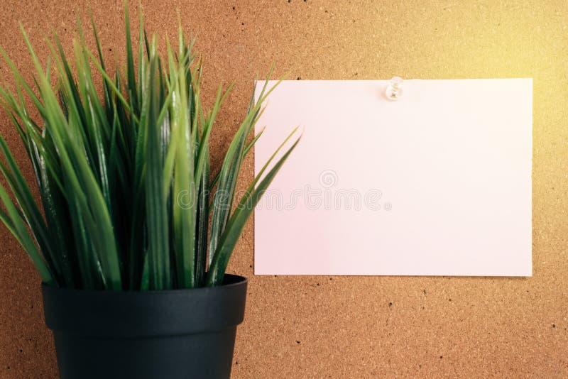Anmerkung des leeren Papiers über Korkenbrett mit Grünpflanze im Topf lizenzfreie stockbilder
