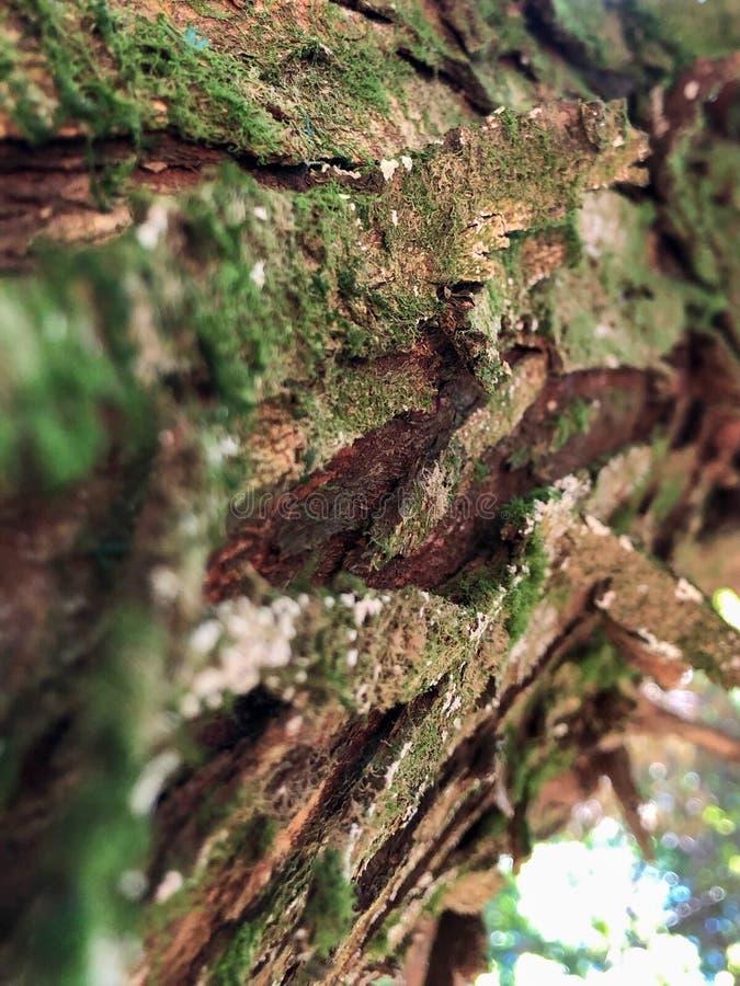 Annäherung an einen schälenden Baum lizenzfreie stockbilder