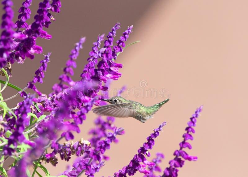 Kolibri Mörtel