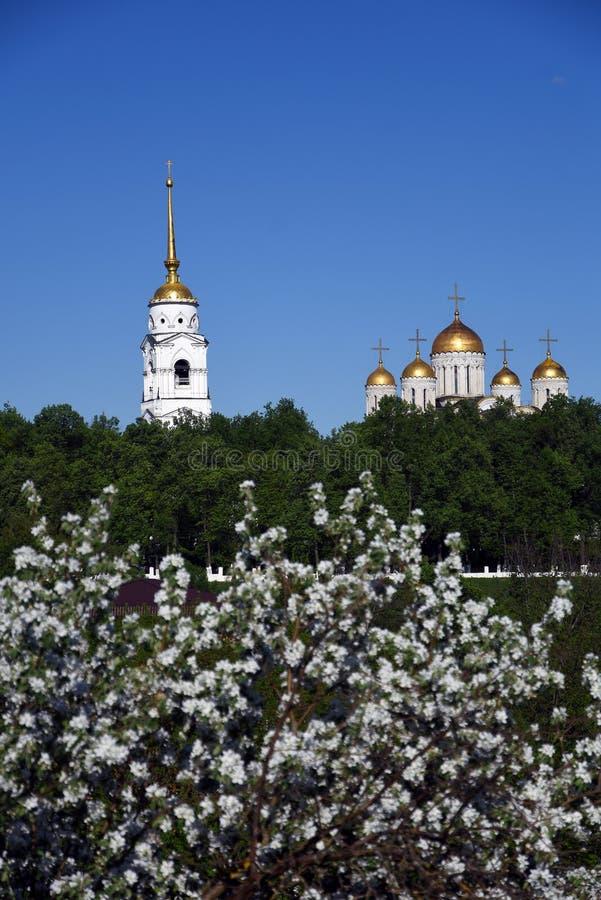 Annahme-Kathedrale in Vladimir, Russland Blühender Kirschbaumvordergrund stockfoto