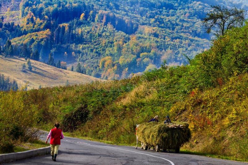 Annalkande hö i de Carpathian bergen arkivbilder