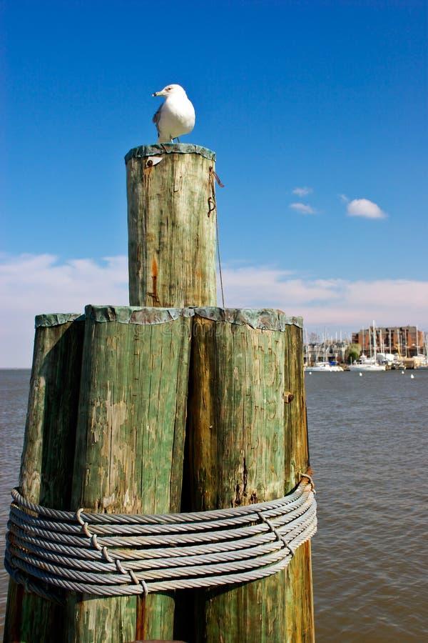 annapolis hamn royaltyfri fotografi