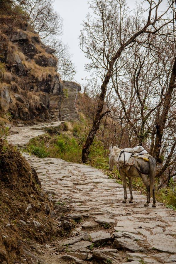 Annapurna banaåsna royaltyfria bilder