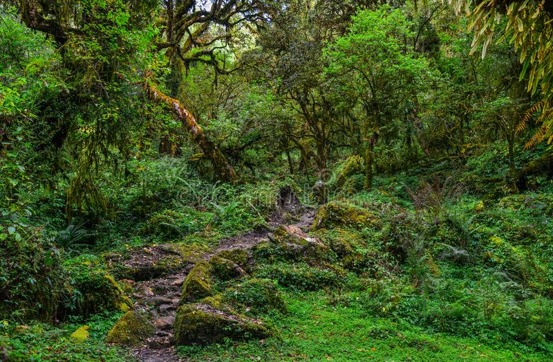 Annapurna trekking slinga i Nepal royaltyfria bilder